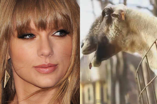 Taylor-Swift---Goat